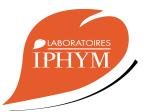 Logo_iphym-1
